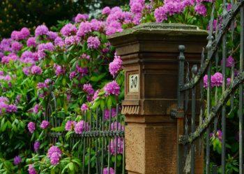 numarul casei destin - sfatulparintilor.ro - pixabay_com - rhododendron-999849_1920