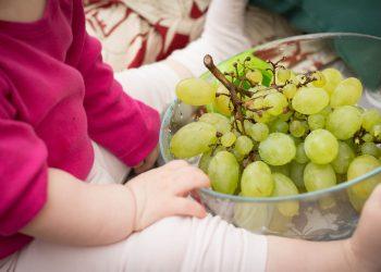 Alimentele interzise copiilor mici - sfatulparintilor.ro - pixabay_com - grapes-531207_1920