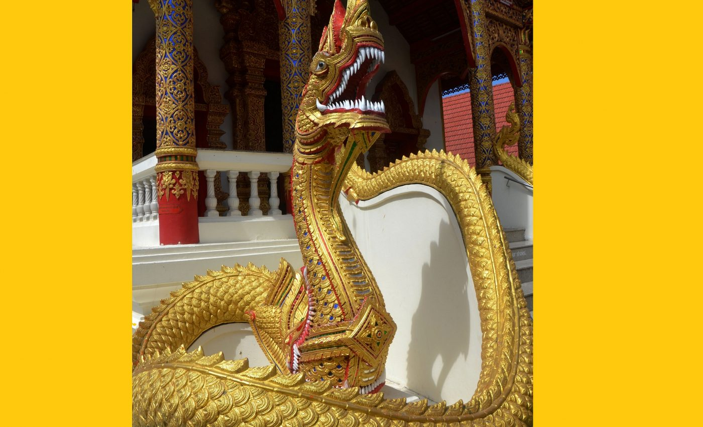 anul sarpelui - sfatulparintilor.ro - pixabay_com - snake-1033430