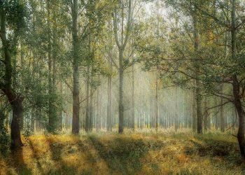 copacul sufletului - sfatulparintilor.ro - pixabay_com - green-1072828_1920