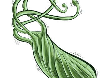 helicobacter pylori - sfatulparintilor.ro - pixabay_com - bacteria-1455818_1280