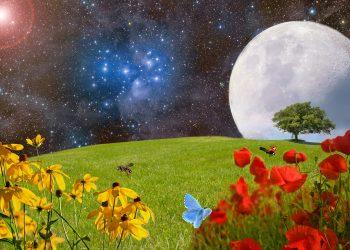 horoscop saptamanal - sfatulparintilor.ro - pixabay_com - meadow-2401931_1920