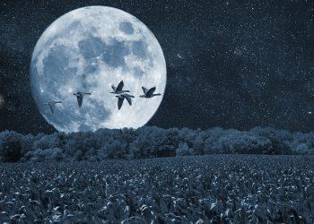 luna plina in sagetator - sfatulparintilor.ro - pixabay_com -night-2634930_1920