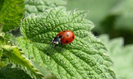 obiecte norocoase - sfatulparintilor.ro - pixabay_com - ladybug-349456_1920