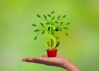planta banilor - sfatulparintilor.ro - pixabay_com - financing-2380158_1920