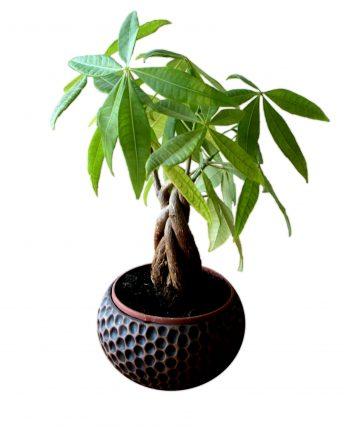 planta banilor - sfatulparintilor.ro - pixabay_com- flower-1329132
