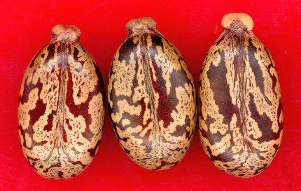 ulei de ricin - seminte - sfatulparintilor.ro - pixabay_com - seeds-4454