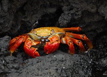 horoscop rac - sfatulparintilor.ro - pixabay_com - crab-63084