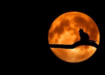 Eclipsa totala de Luna iulie 2018 - sfatulprintilor.ro - pixabay_com - tree-736877_1280