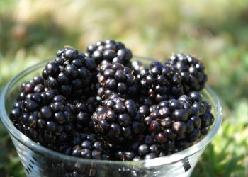 beneficii mure - sfatulparintilor.ro - pixabay_com - blackberry-2822928_1920