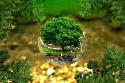 culoare de putere - sfatuparintilor.ro - pixabay-com - environmental-protection-326923_1920