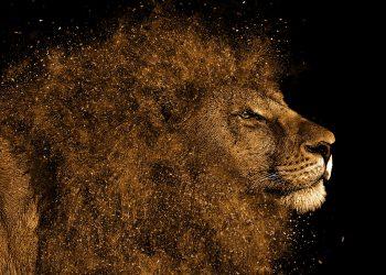 horoscop leu - sfatulparintilor.ro - pixabay_com - lion-1987792_1920