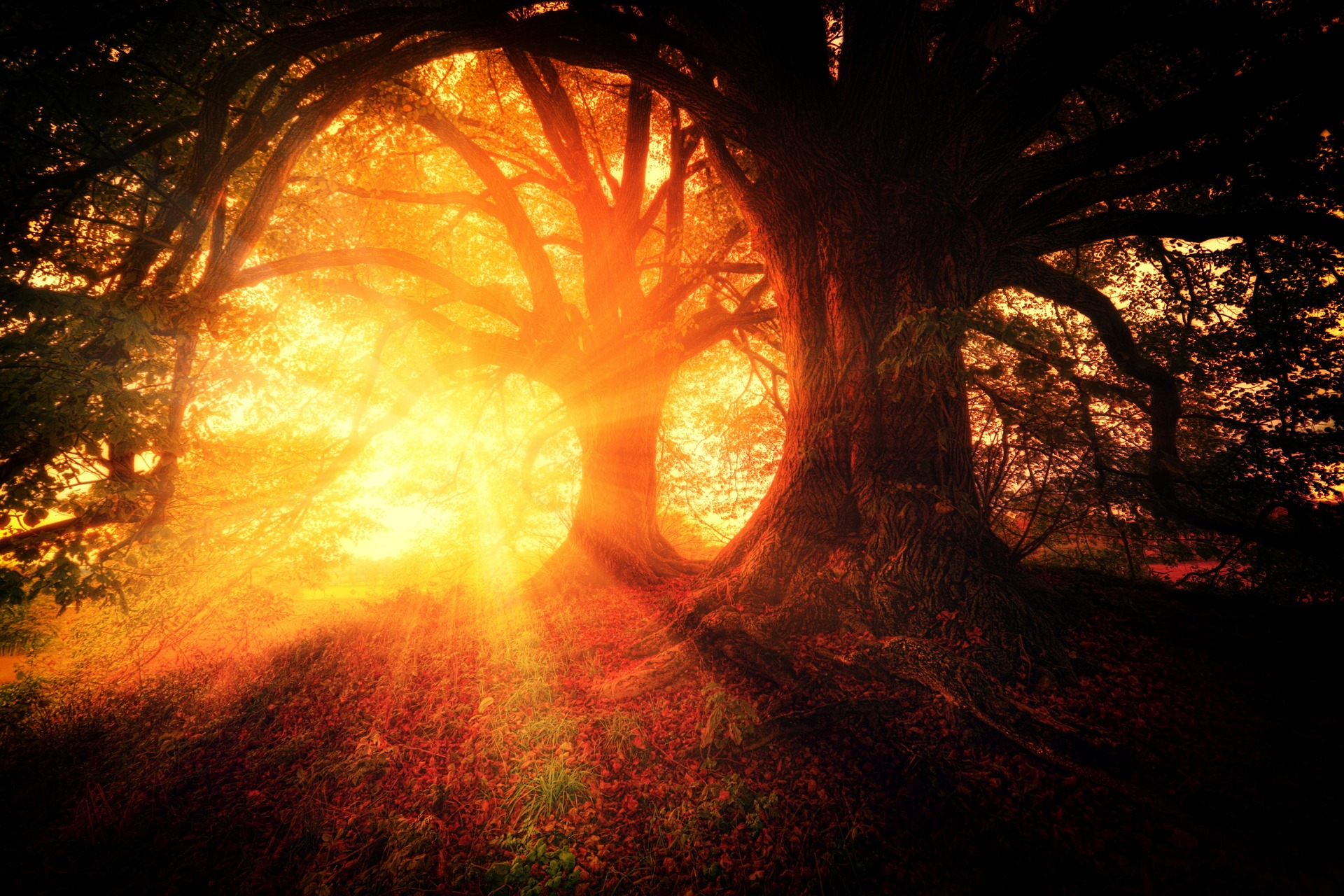 horoscop saptamanal - sfatulparintilor.ro - pixabay_com - trees-2562083_1920