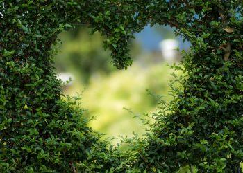 terapia Ho'oponopono -sfatulparintilor.ro - pixabay_com= heart-1192662_1920