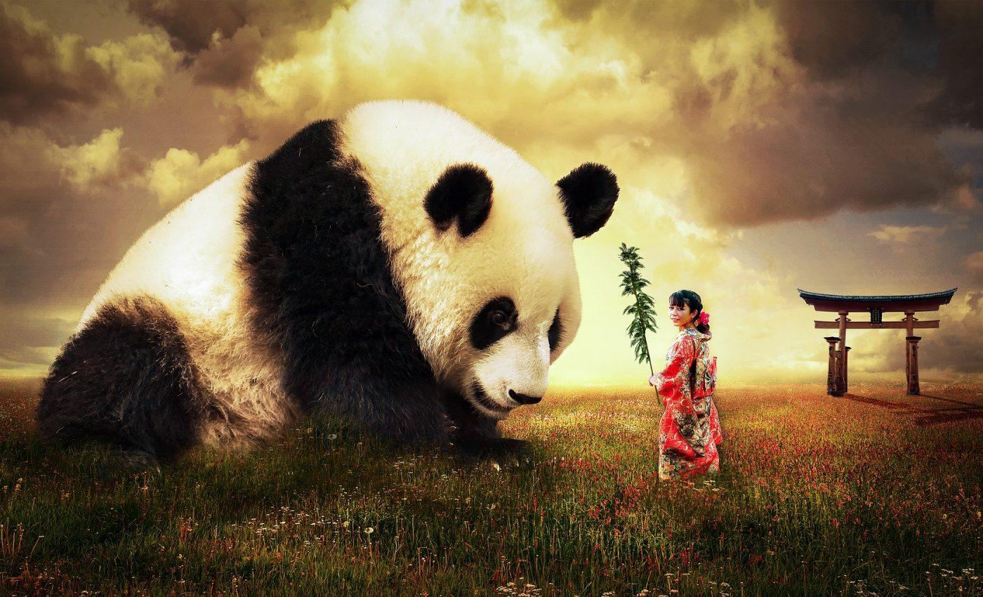 zodiac chinezesc saptamanal - sfatulparintilor.ro - pixabay_com - panda-2987596_1920