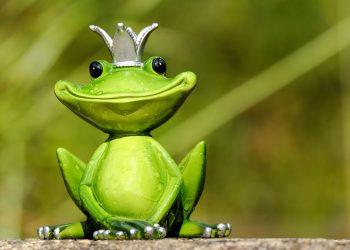 intrebare sa nu pui zodiilor - sfatulparintilor.ro - pixabay_com - frog-2240764_1920