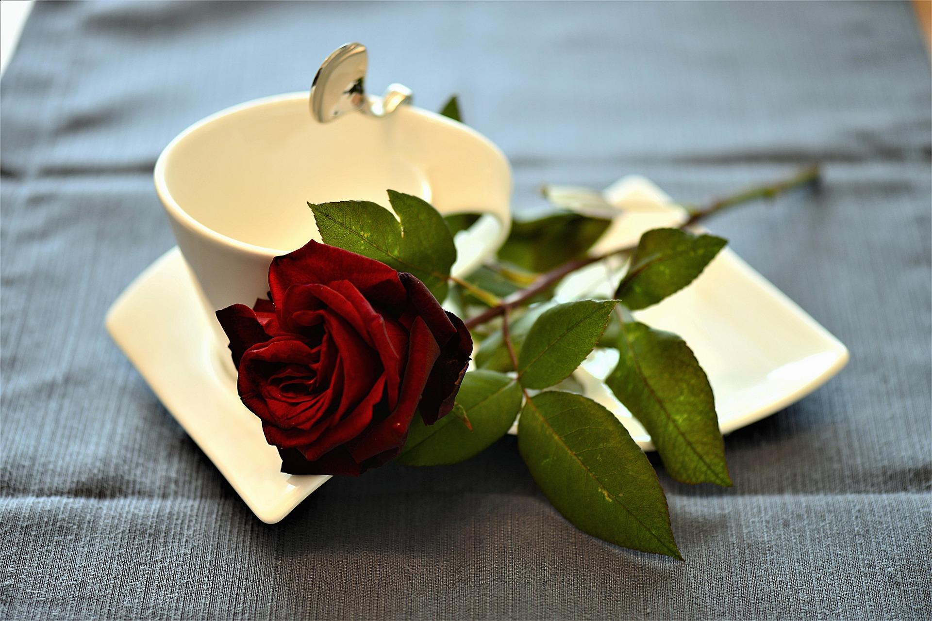 buna dimineata mesaje - sfatulparintilor.ro - pixabay_com - rose-2796228_1920