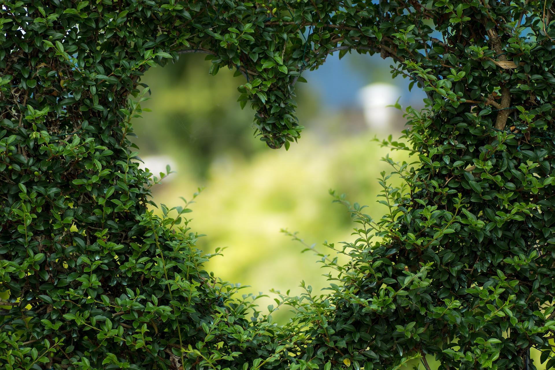 horoscop dragoste -sfatulparintilor.ro - pixabay_com - heart-1192662_1920