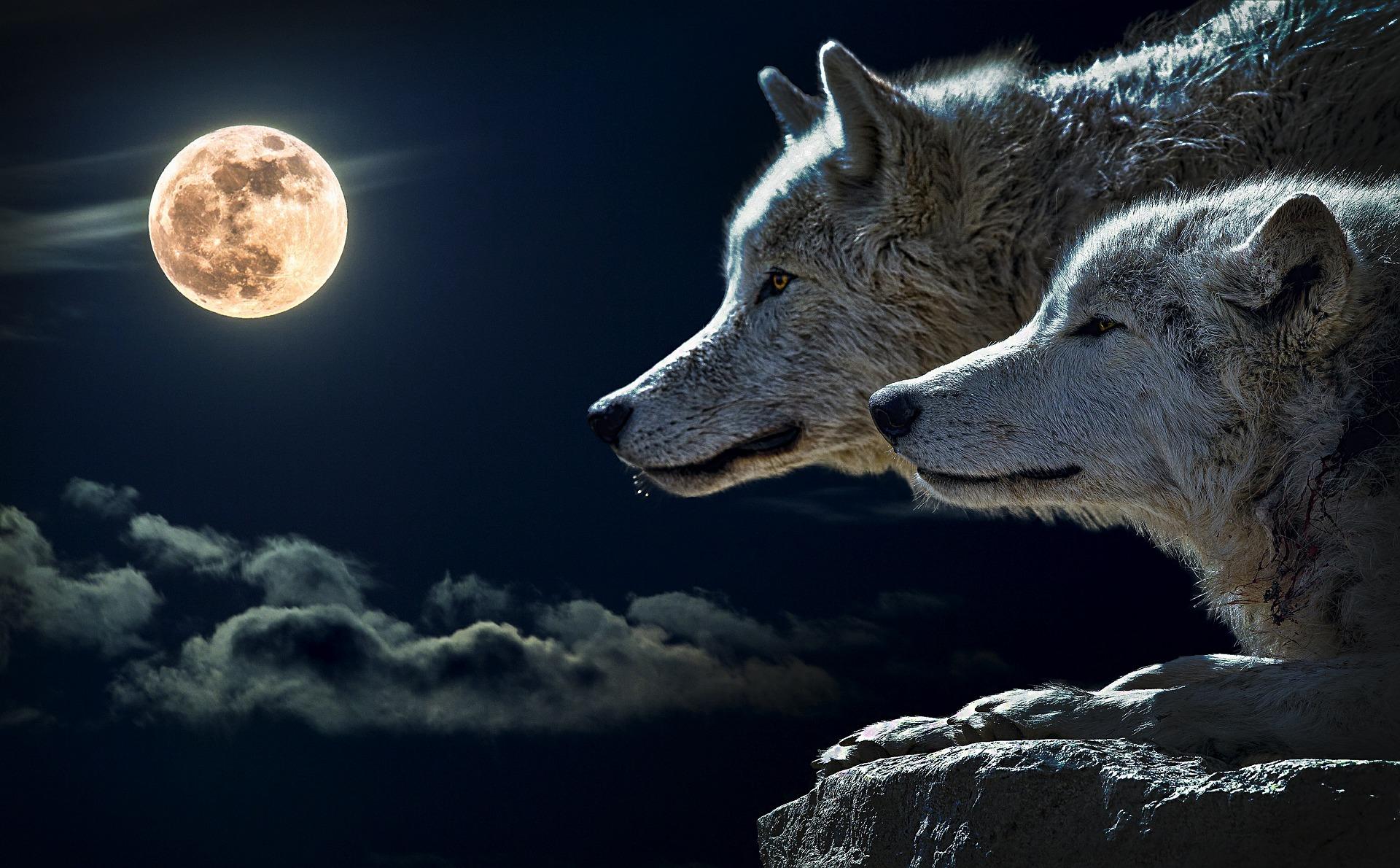 horoscop saptamanal - sfatulparintilor.ro - pixabay_com - wolf-547203_1920