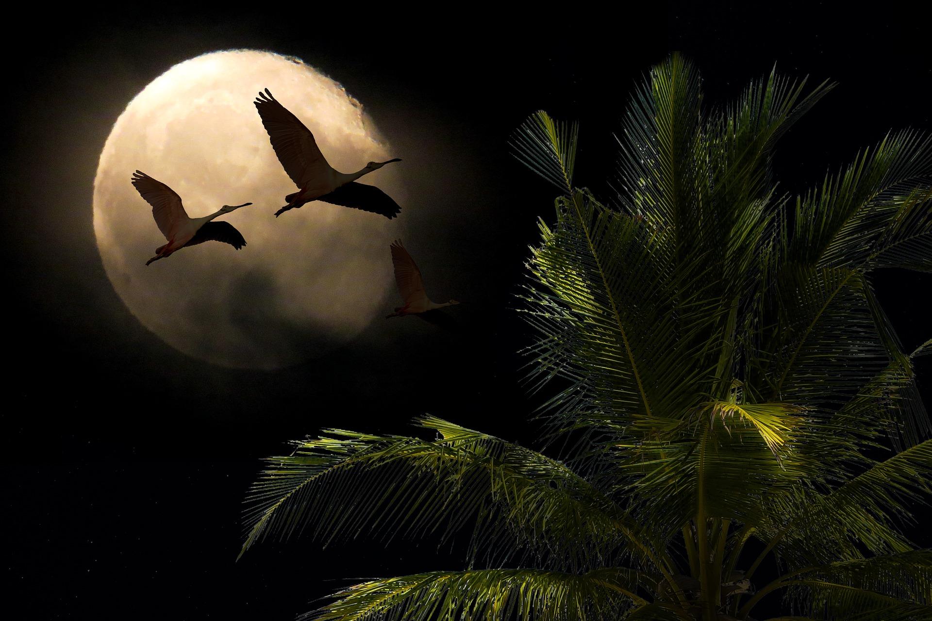 horoscop weekend - sfatulprintilor.ro - pixabay-com - landscape-3664283_1920