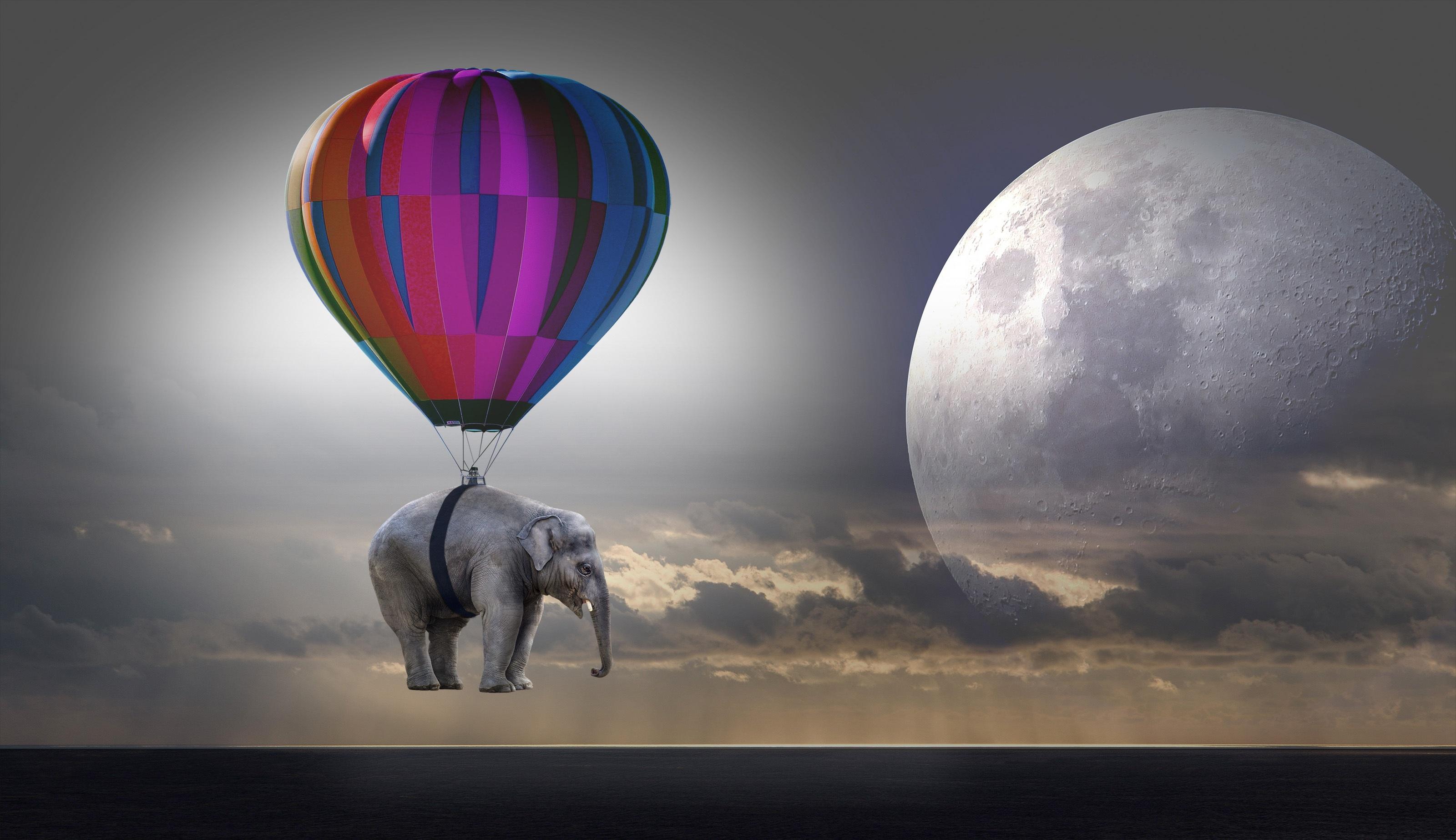 horoscop weekend - sfatulparintilor.ro - pixabay_com - elephant-2611677