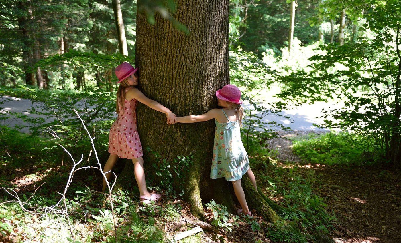 Terapie prin copaci