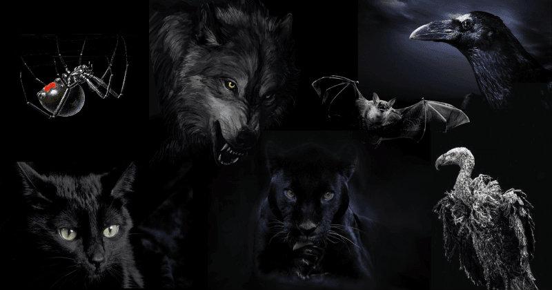 Alege un animal