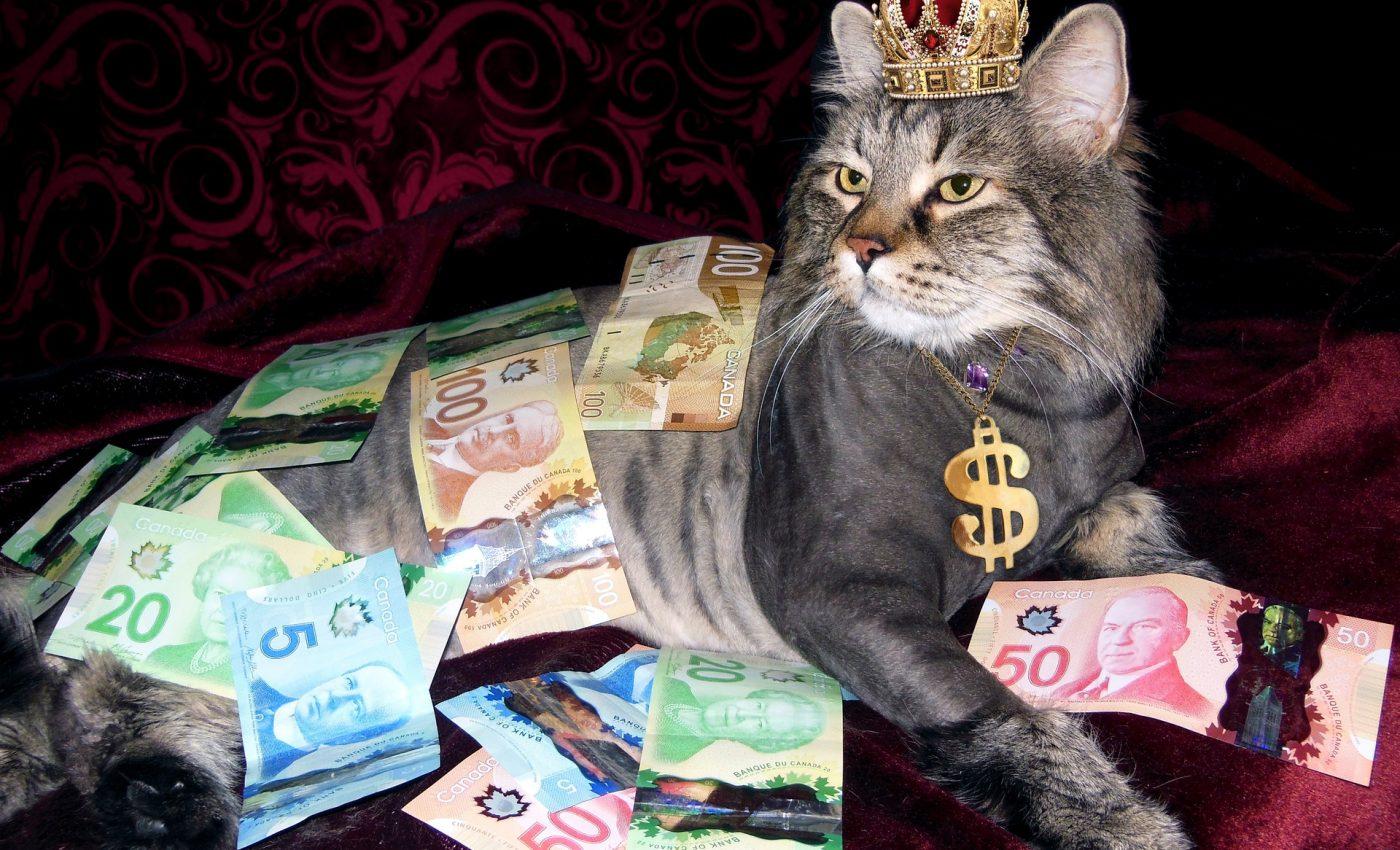 pisică cum să câștigi mulți bani