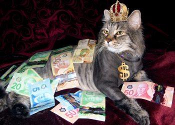 ce inseamna cand visezi bani - sfatulparinitlo.ro - pixabay_com - money-1144553_1920