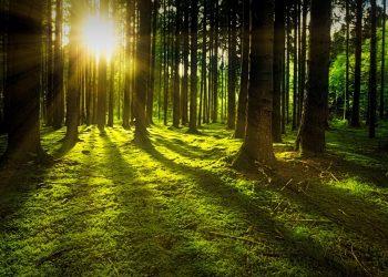 puterile miraculoase ale copacilor