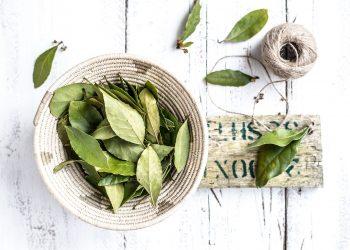 frunze de dafin - sfatulparintilor.ro - monika-grabkowska-663126-unsplash