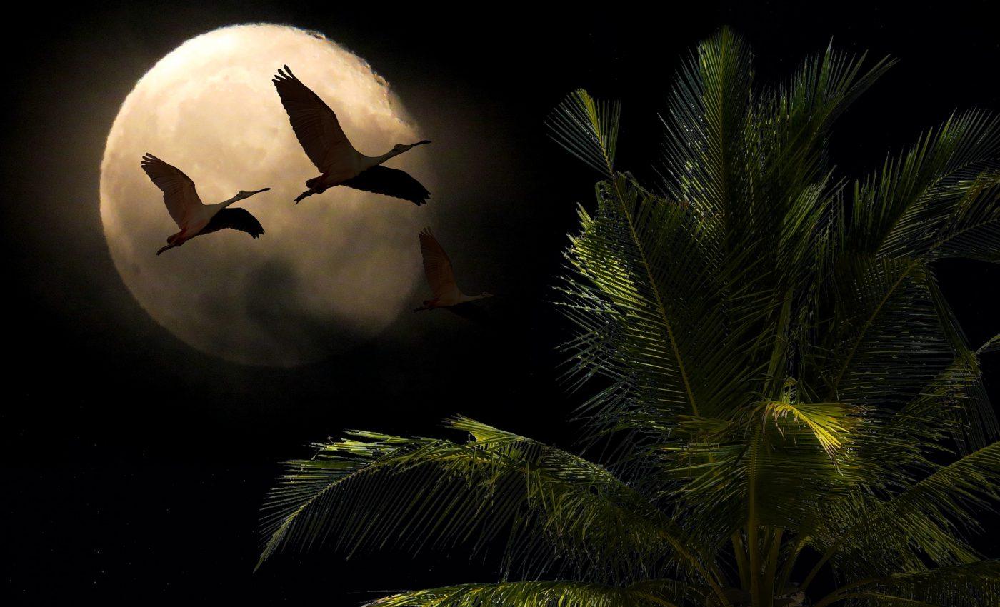 superluna echinoctiu