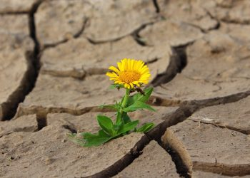 Citate motivationale - sfatulparintilor.ro - pixabay_com - flower-887443_1920