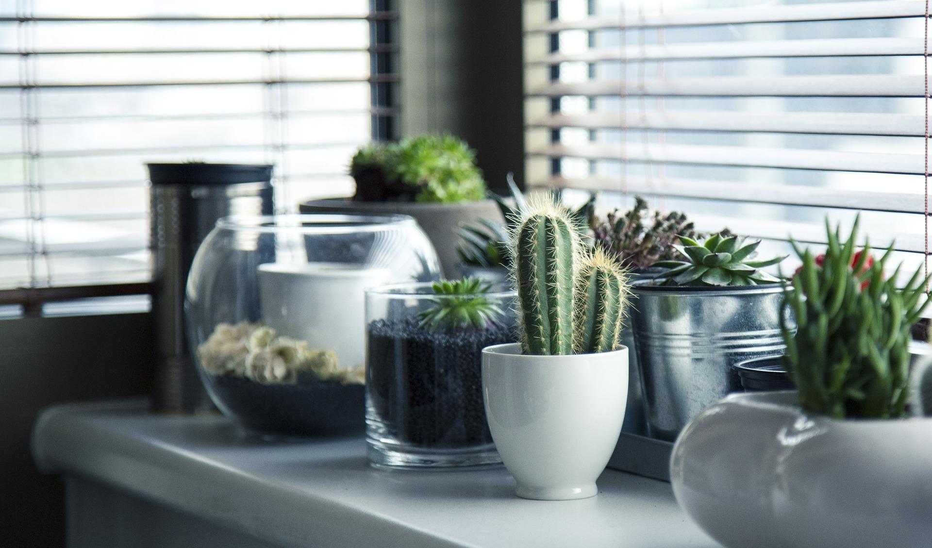 plante de apartament zodii
