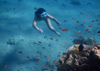 beneficii scuba diving