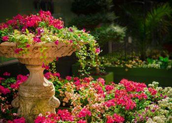 plante in functie de zodie - sfatulparintilor.ro - pixabay_com - nature-670516_1920