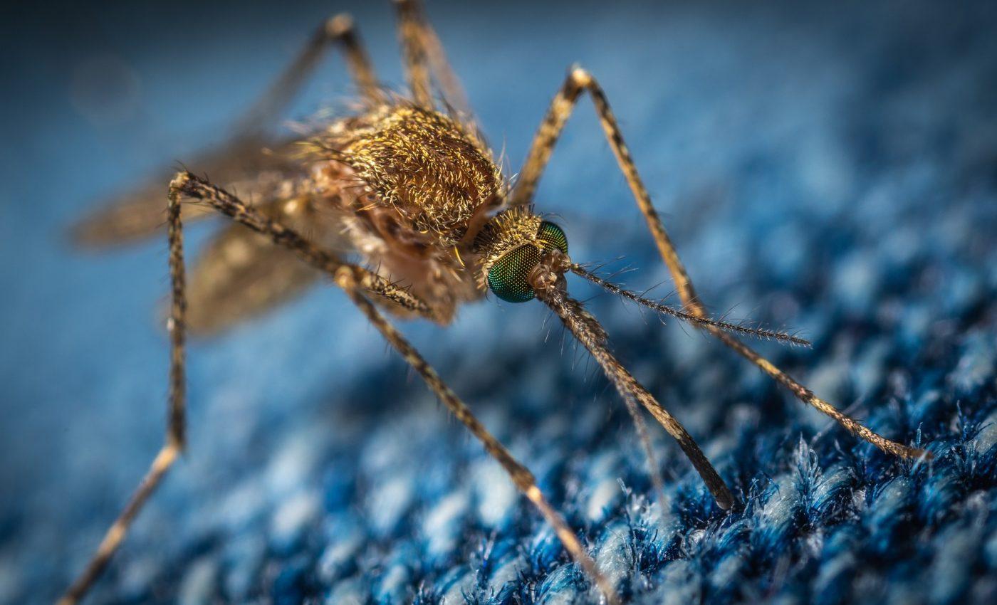 remedii naturale pentru intepaturile de tantari - sfatulparintilor.ro - pixabay_com - mosquito-3743404_1920