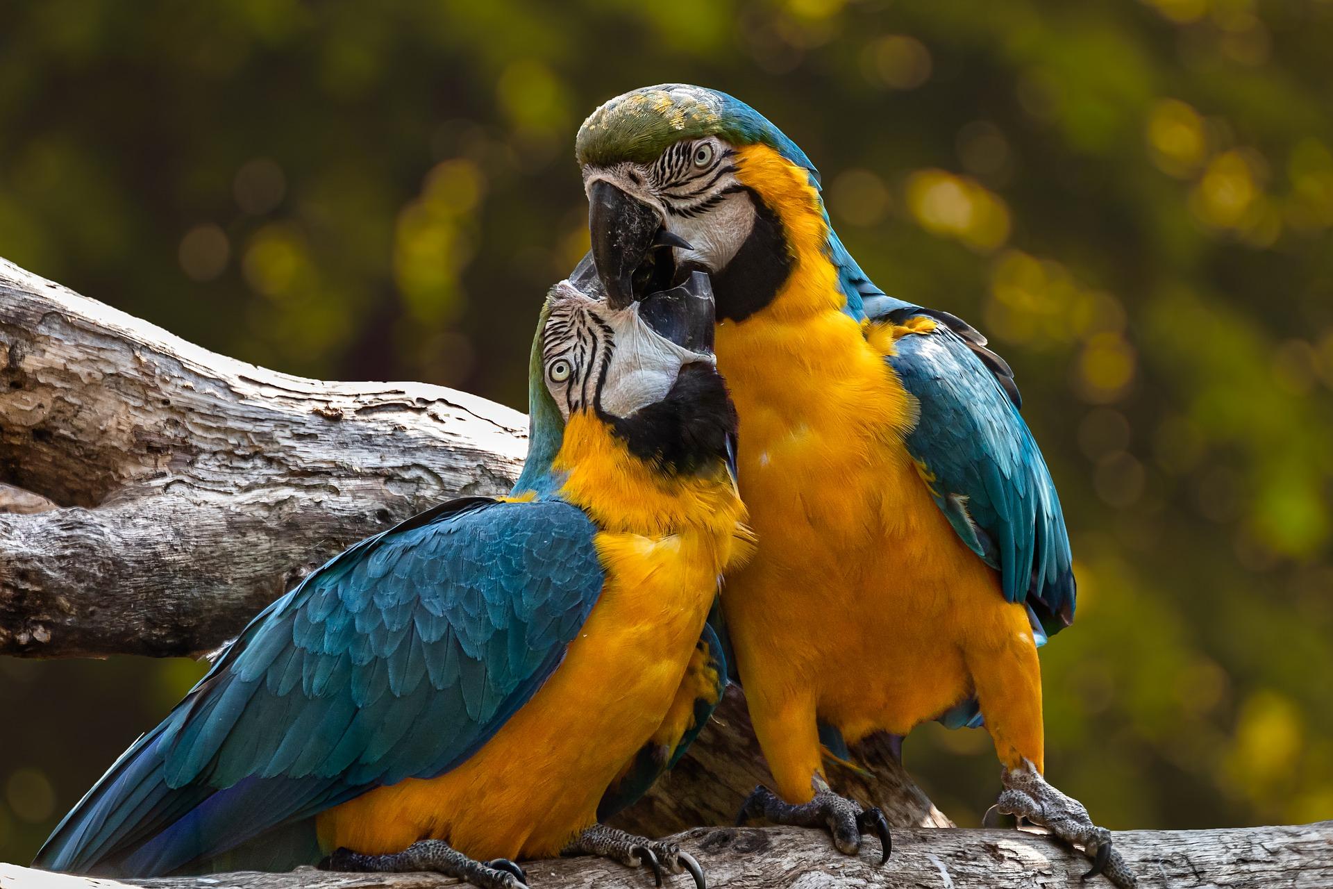 horoscop zilnic dragoste - sfatulparintilor.ro - pixabay_com - parrots-3427188_1920