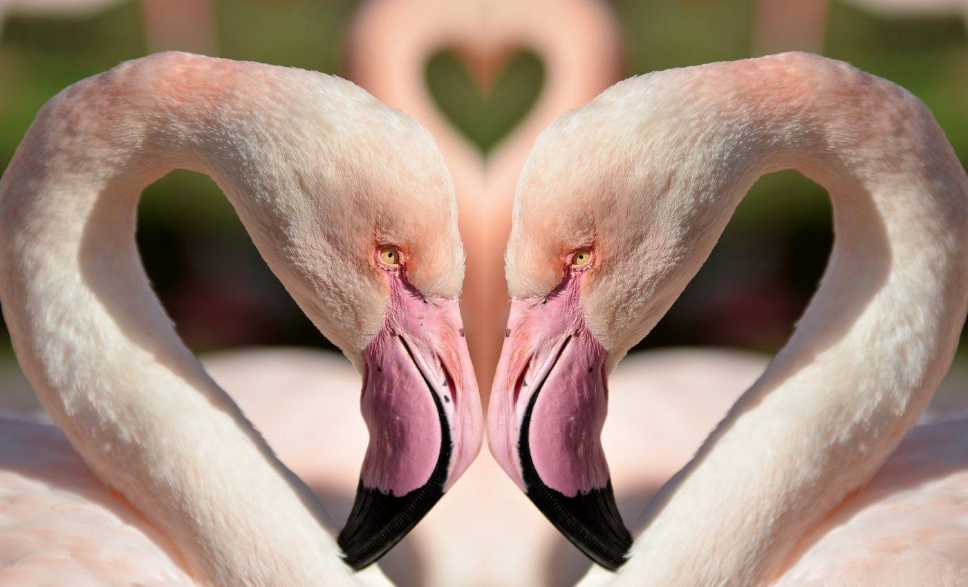 horoscop saptamanal gemini dragoste