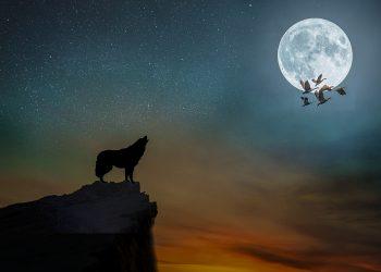 horoscop weekend -sfatulparintilor.ro - pixabay_com - manipulation-4444779_1920