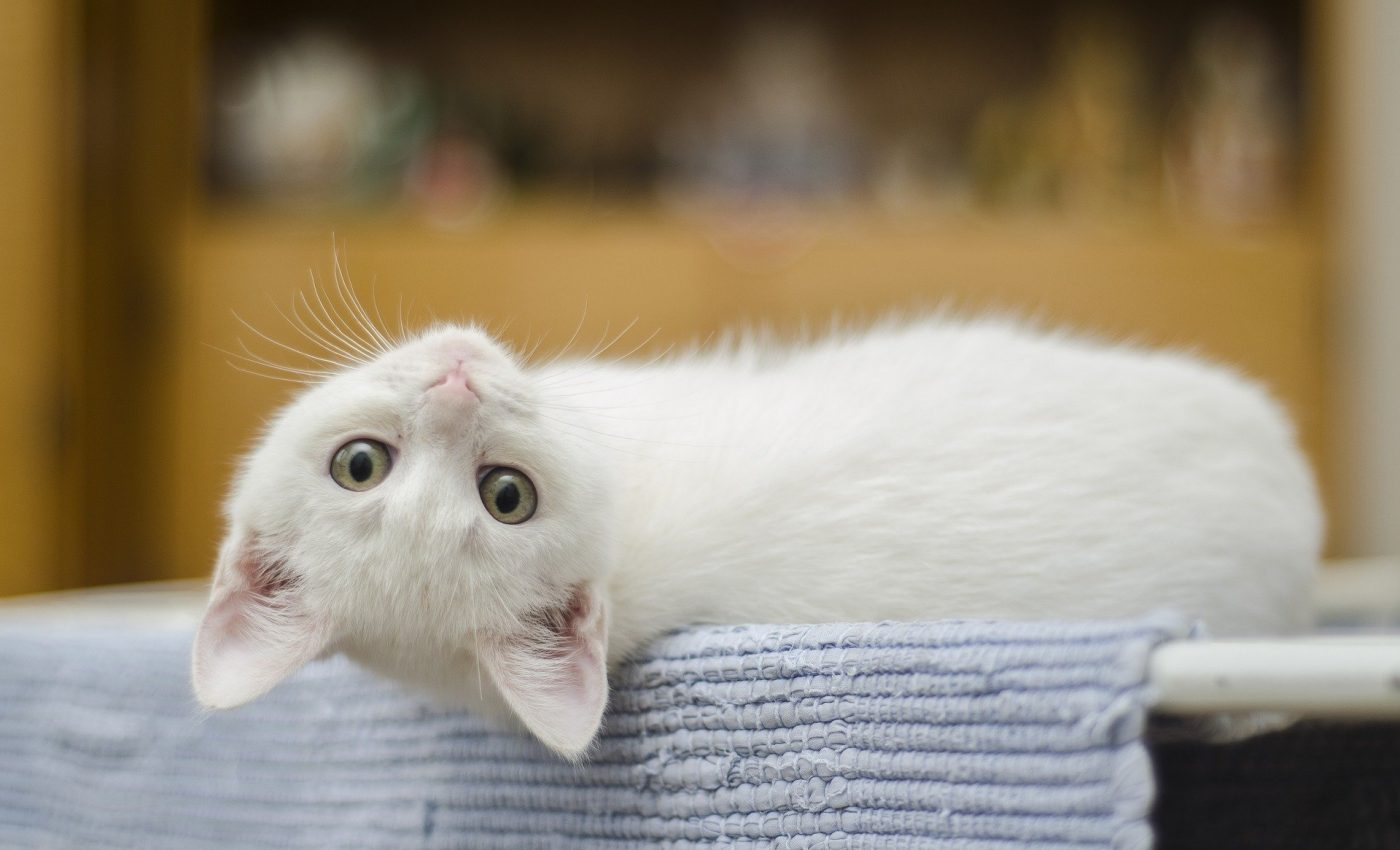 De ce e bine sa ai o pisica in casa