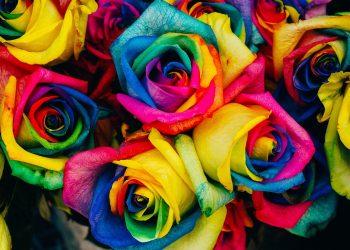 semnificatia culorilor - sfatulparintilor.ro - pixabay_com - roses-828945_1920