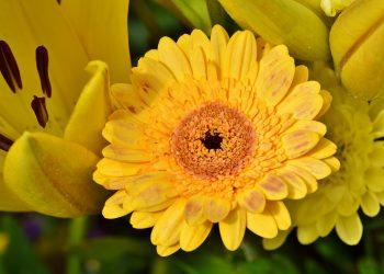 Ce semnifica culoarea galben