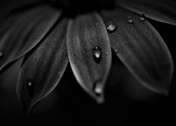Ce semnifica culoarea neagra