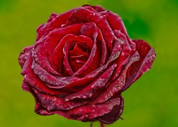 Ce semnifica culoarea rosie
