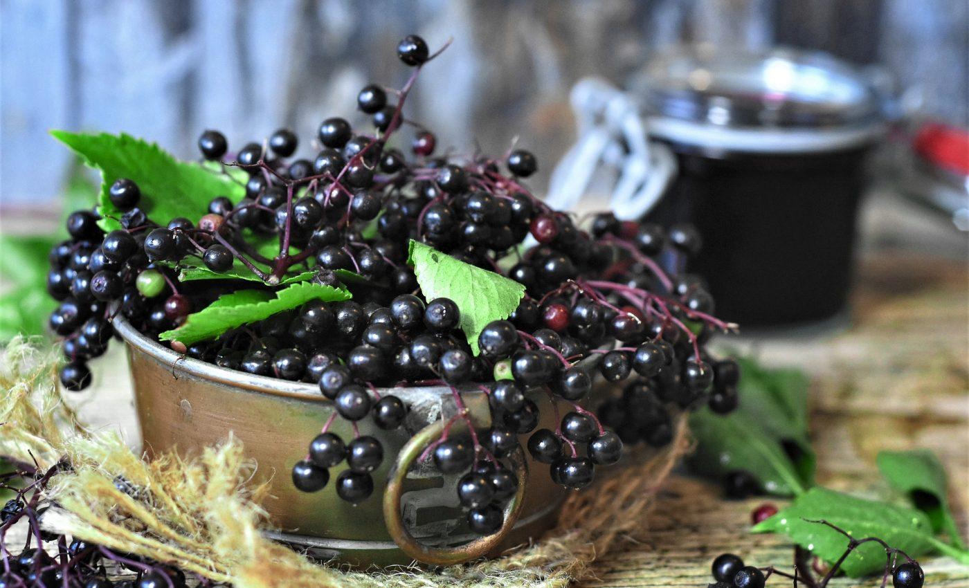 Ceai de soc - sfatulparintilor.ro - pixabay_com - elder-4434796_1920