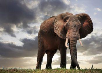 Povestea elefantului - sfatulparintilor.ro - pixabay_com - elephant-4250135_1920