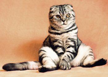 Ce boli vindeca pisica - sfatulparintilor.ro - pixabay_com - cat-2934720_1920
