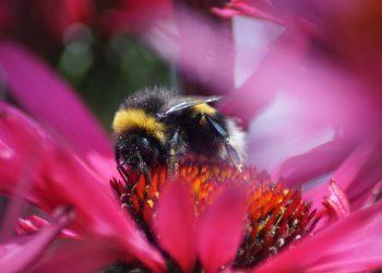 Ce boli vindeca mierea de Manuka - sfatulparintilor.ro - pixabay_com - carolien-van-oijen-407HasnQQyg-unsplash
