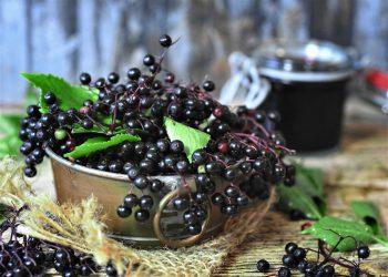 Beneficiile fructelor de soc - sfatulparintilor.ro - pixabay_com - elder-4434796_1920